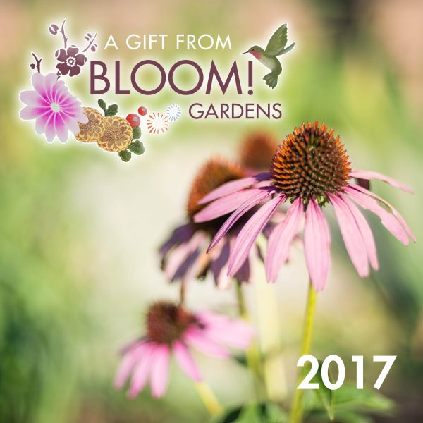 2017 gift certificate bloom gardens lotus gardens capes