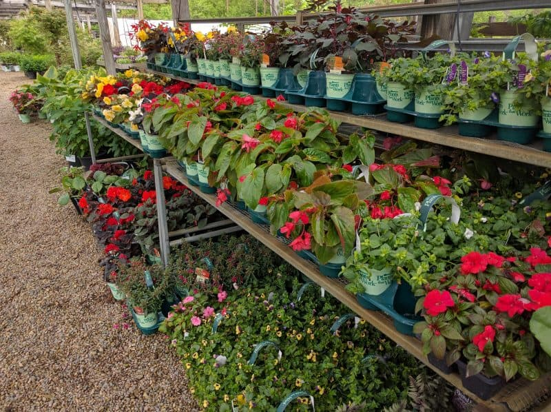 Flowering-Annuals-for-Shade